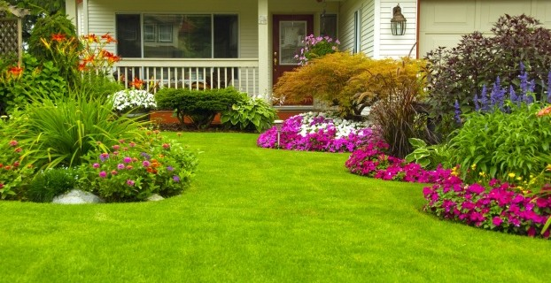 7 Top Tips to a Lush Lawn